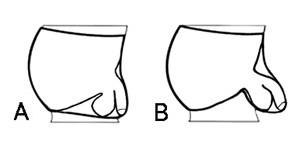 Ergowear Max Modal